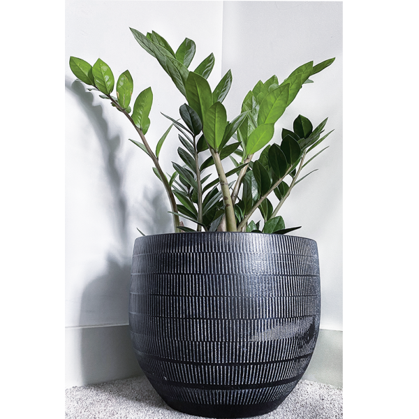 a london brand flower plant pot and potter